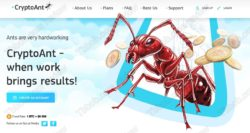 Crypto Ant official web